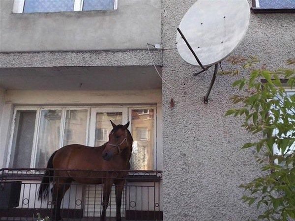 weird-horse