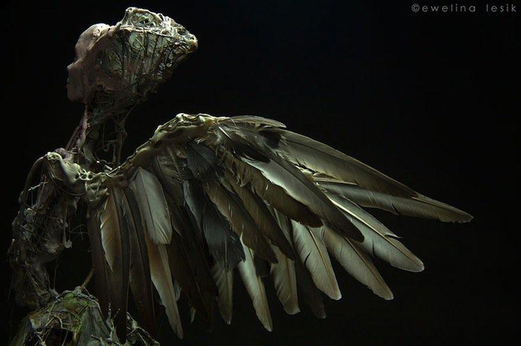 zoo-winged