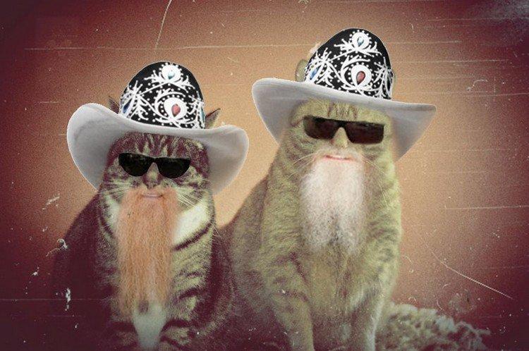zz top cats