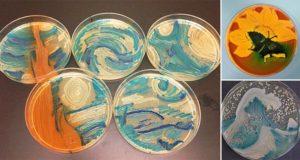 Bacteria International Agar Art Challenge
