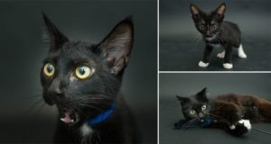 Casey Elise Photographs Black Cats