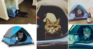 Cat Camp Tents