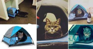 Cat Camp Tents