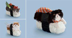 Cat Sushi Rolls