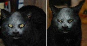 Demon Cat Covered In Flour