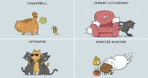 Different Types Of Cat Personalities