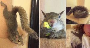 Jill Rescued Hurricane Squirrel