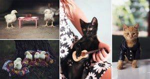 Jovana Rikalo Animals Who Think They're Human