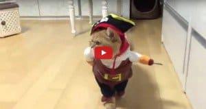 Pirate-Cat Halloween