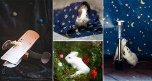 Rachele Totaro Ex-Lab Animals Photographed As Characters