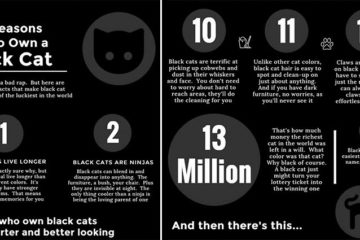 Reasons To Own A Black Cat