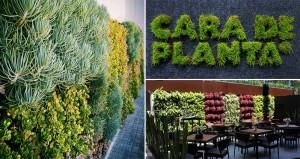 Vertical Gardening Cara De Planta