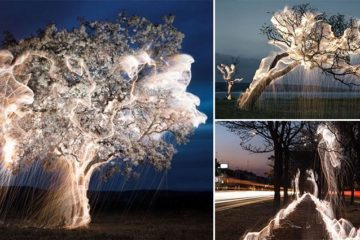 Vitor Schietti Light 'Dripping' From Trees