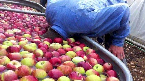 apple dooking