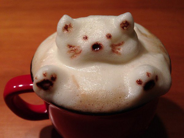 awataccino cat