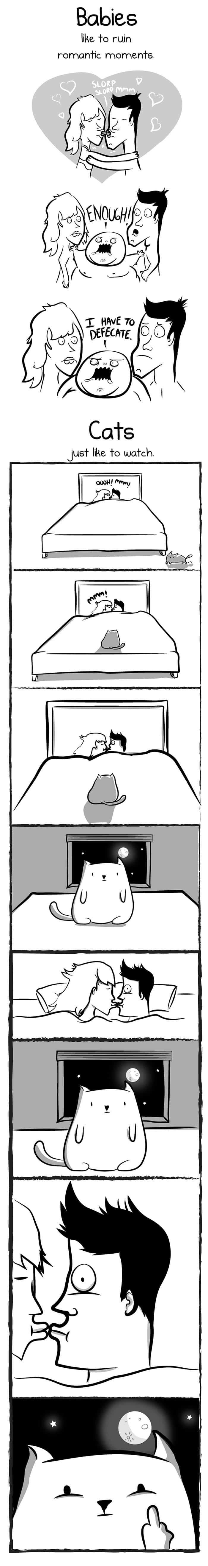babies cats romance ruin