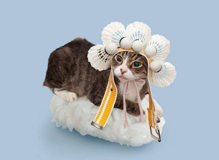 badminton sushi cat