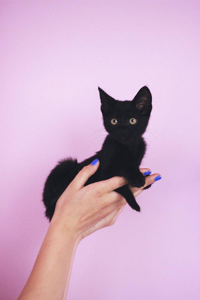 black kitten hand
