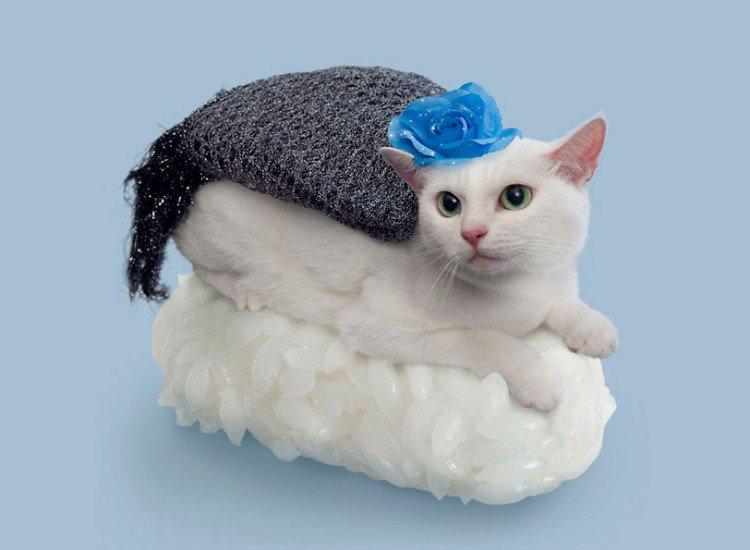 blanket flower sushi cat