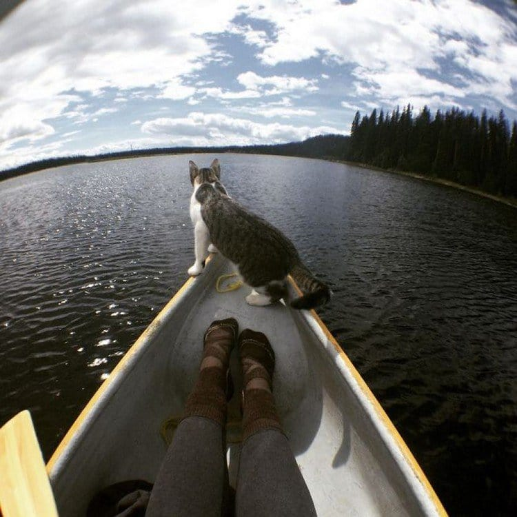 boating cats