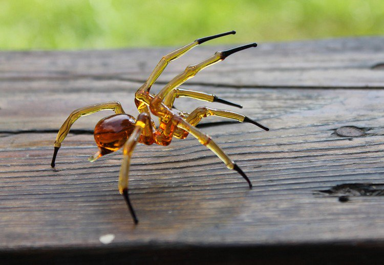 brown glass spider