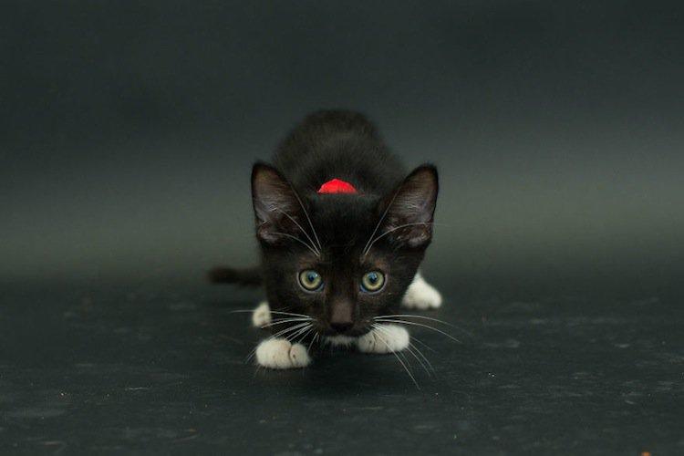 cat-black