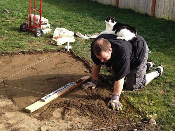 cat-builder