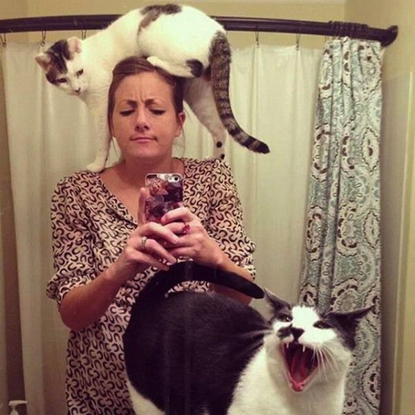 cat-climb
