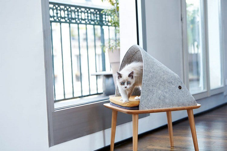 cat cocoon window