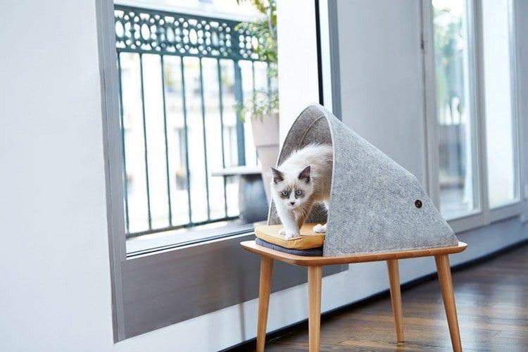 cat cocoon window