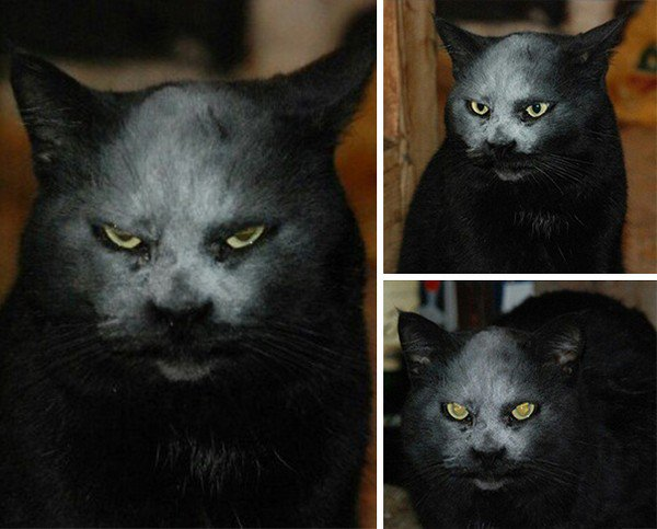 cat flour face montage