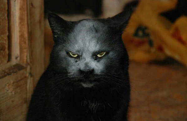cat flour face staring