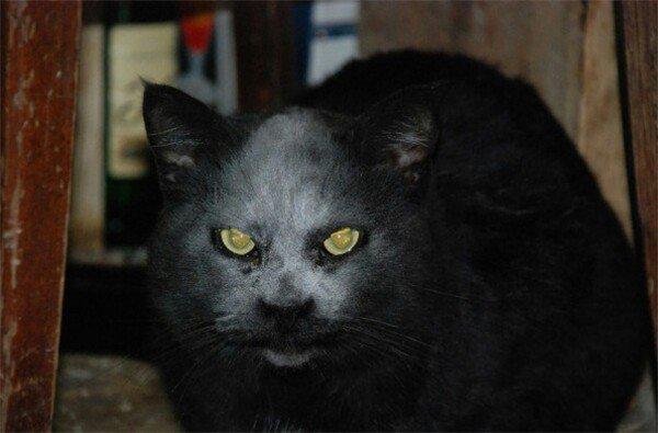 cat flour face