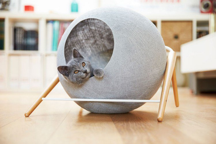 cat gray cocoon