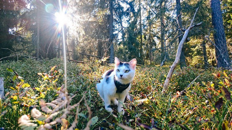 cat in forest