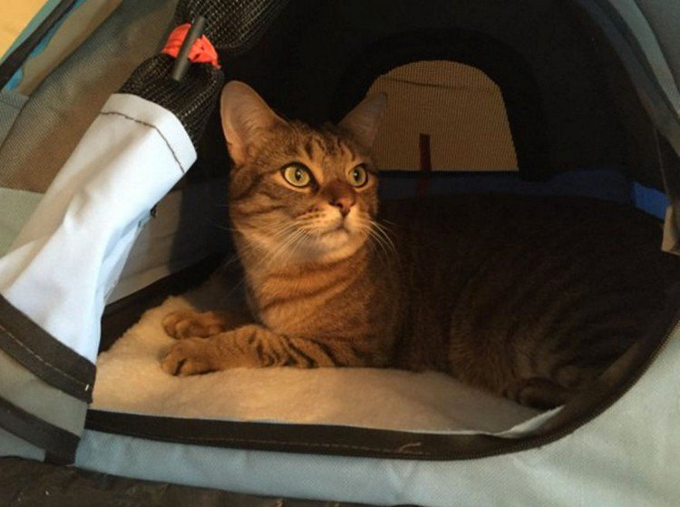 Your Feline Will Love These Awesome Cat Camp Tents