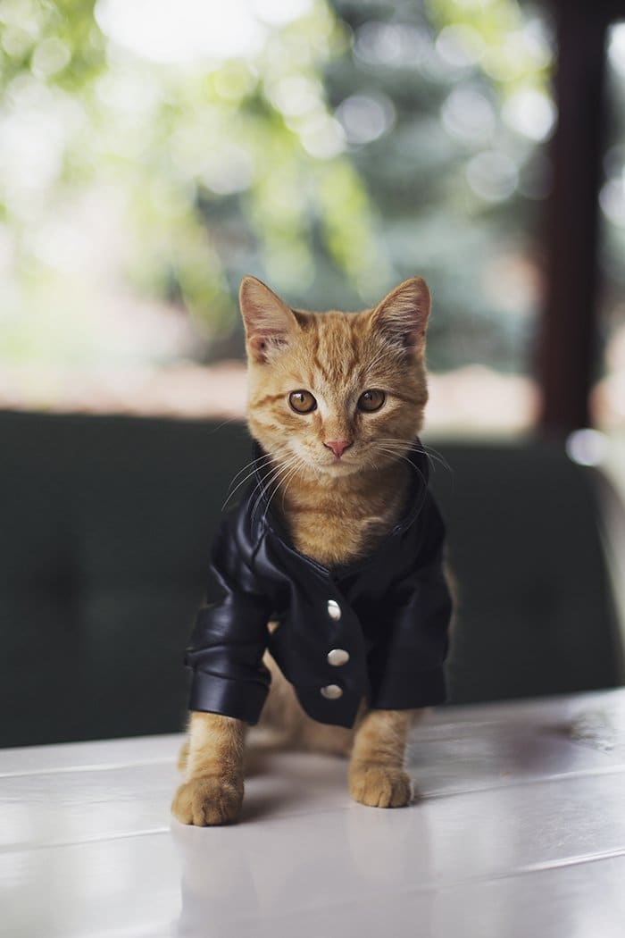 how to make a cat jacket