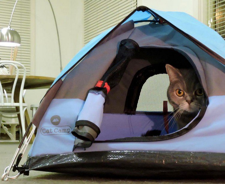 cat peeking tent