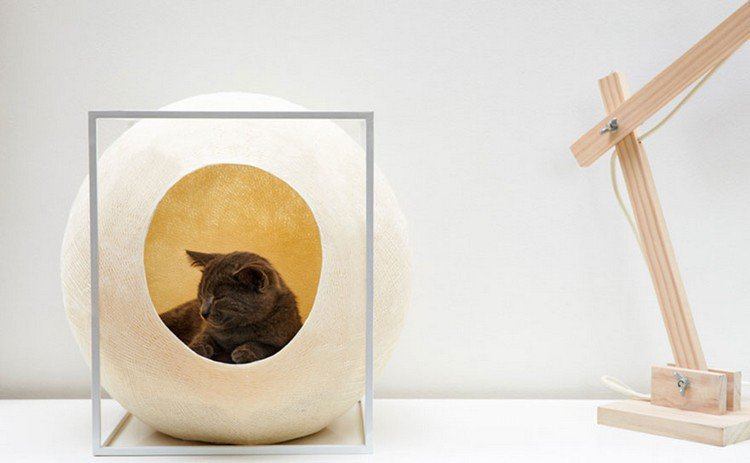 cat resting cocoon