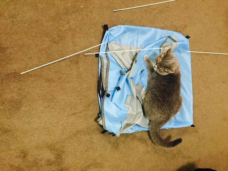 cat tent assemble