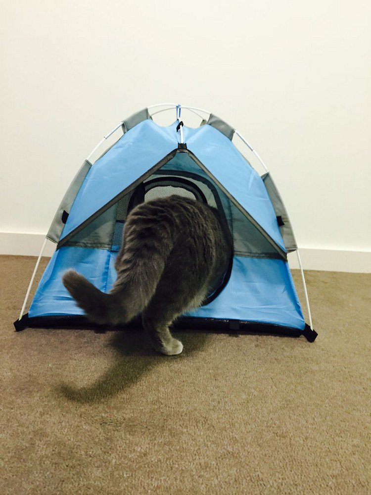 cat tent behind