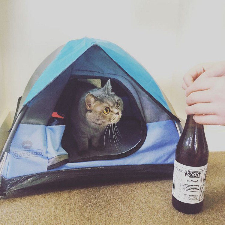 cat tent bottle