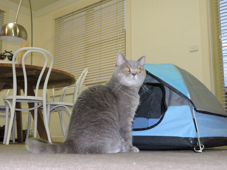 cat tent dining room