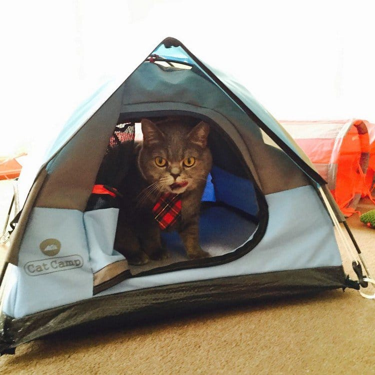 cat tongue tent
