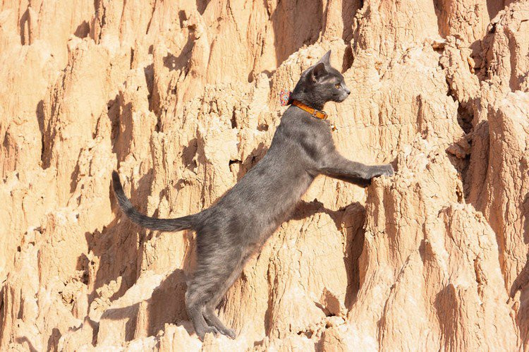 climbing cat