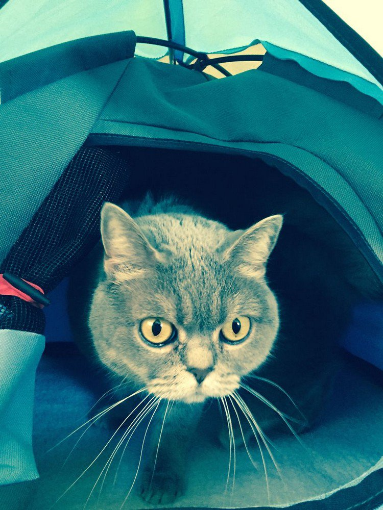 close up cat tent