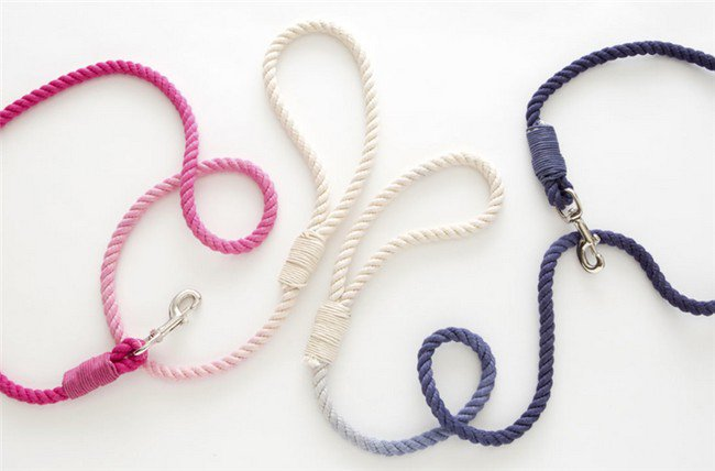 colored dog leads