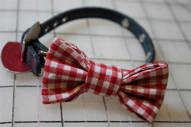 16 Awesome Diy Dog Accessory Ideas You And Your Pooch Will