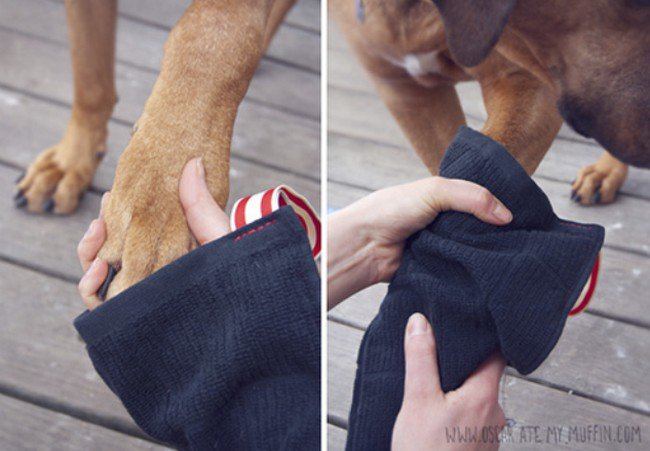 dog mitts