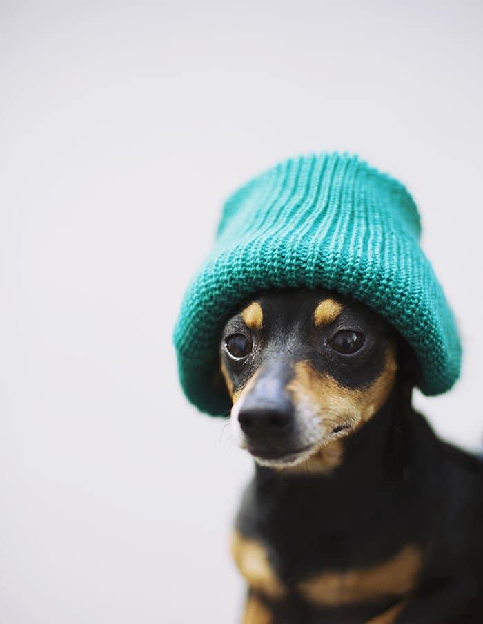 dog wool hat